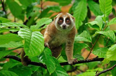 Bangkok Airways Supports Slow Loris Conservation Project